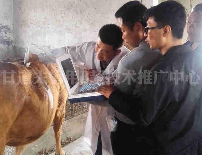 牛背膘B超现场培训1
