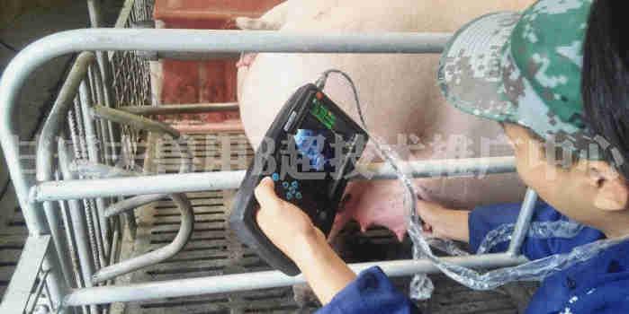 猪用B超现场培训2