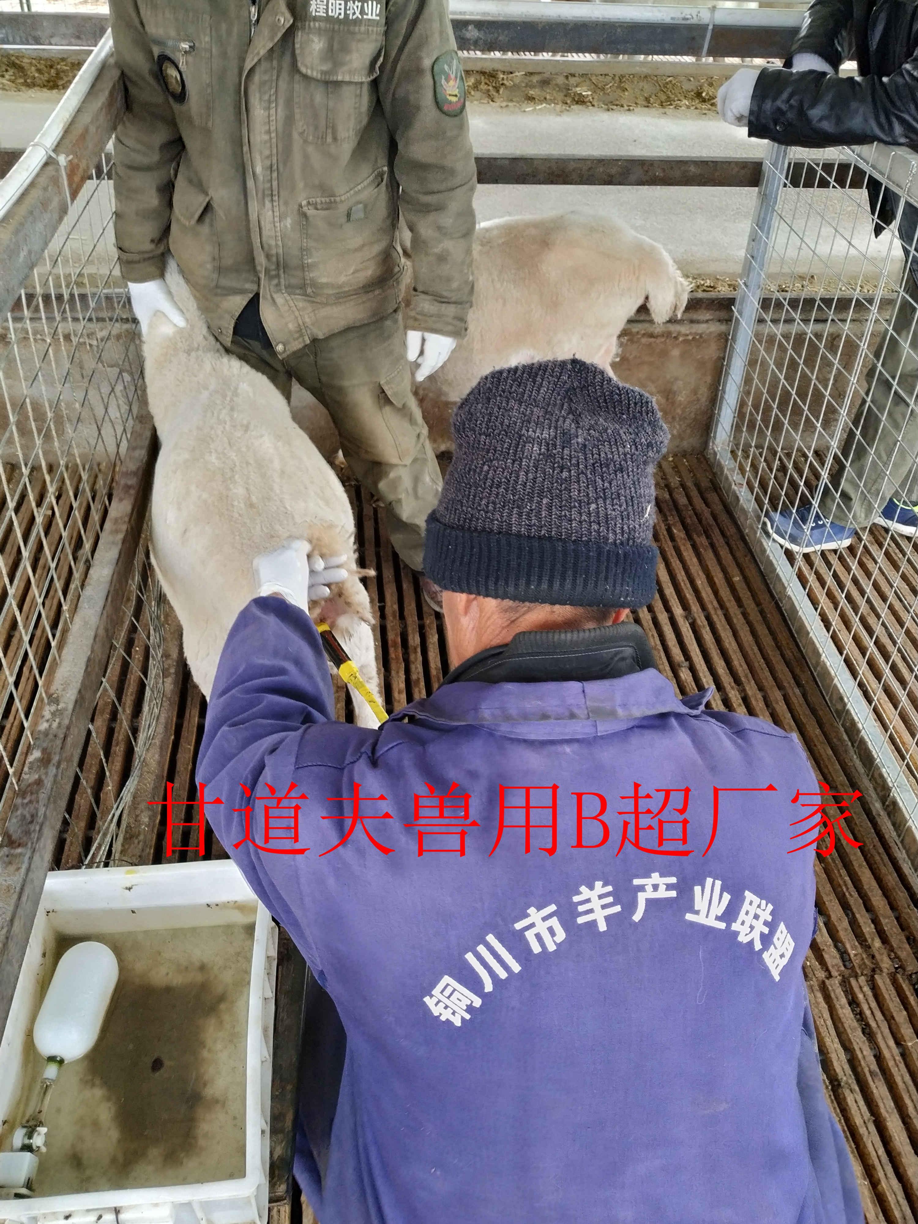 陕西铜川程明牧业采购甘道夫羊用B超厂家产品