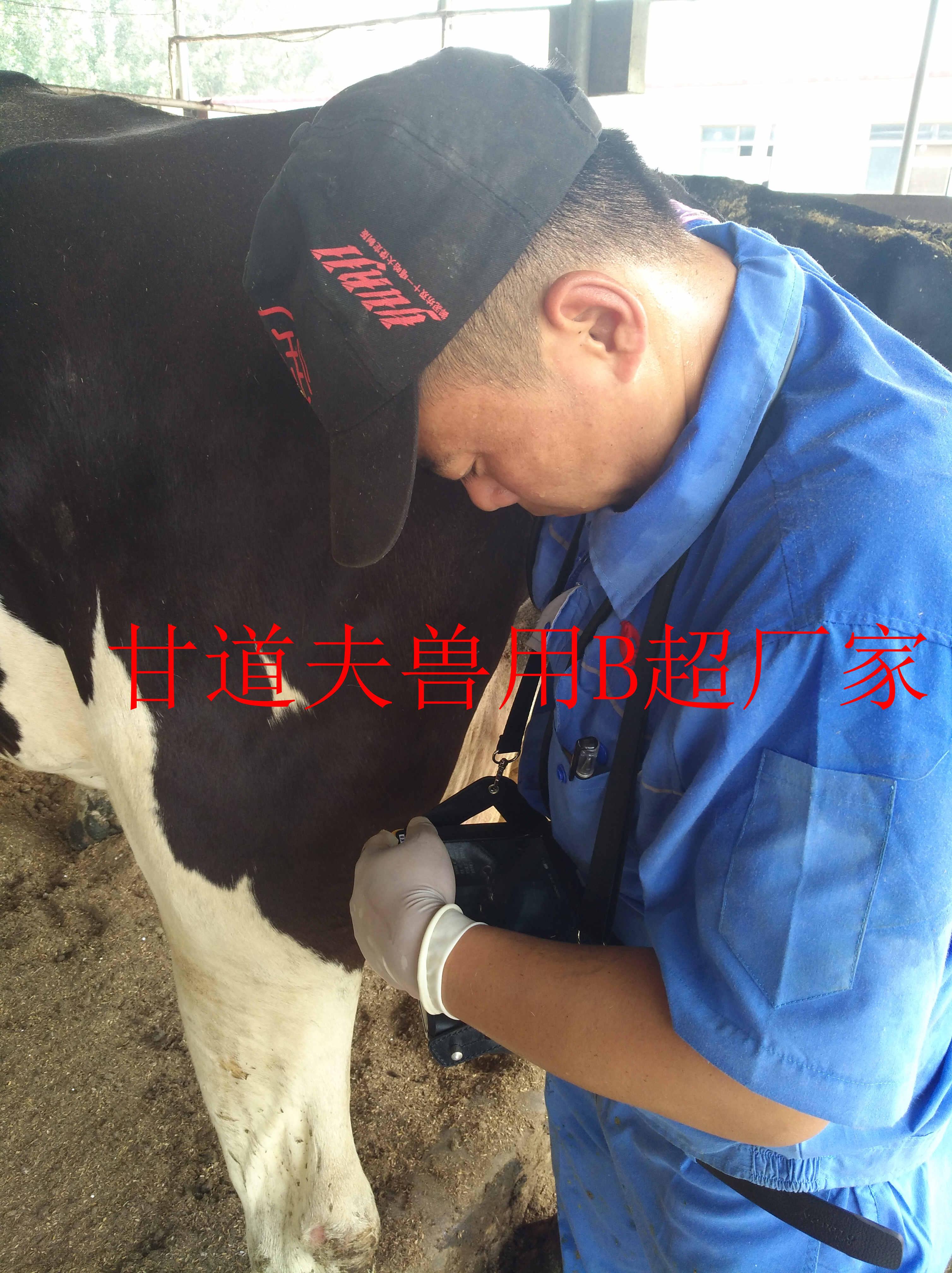 中型牧场选择非进口牛用B超也不错的