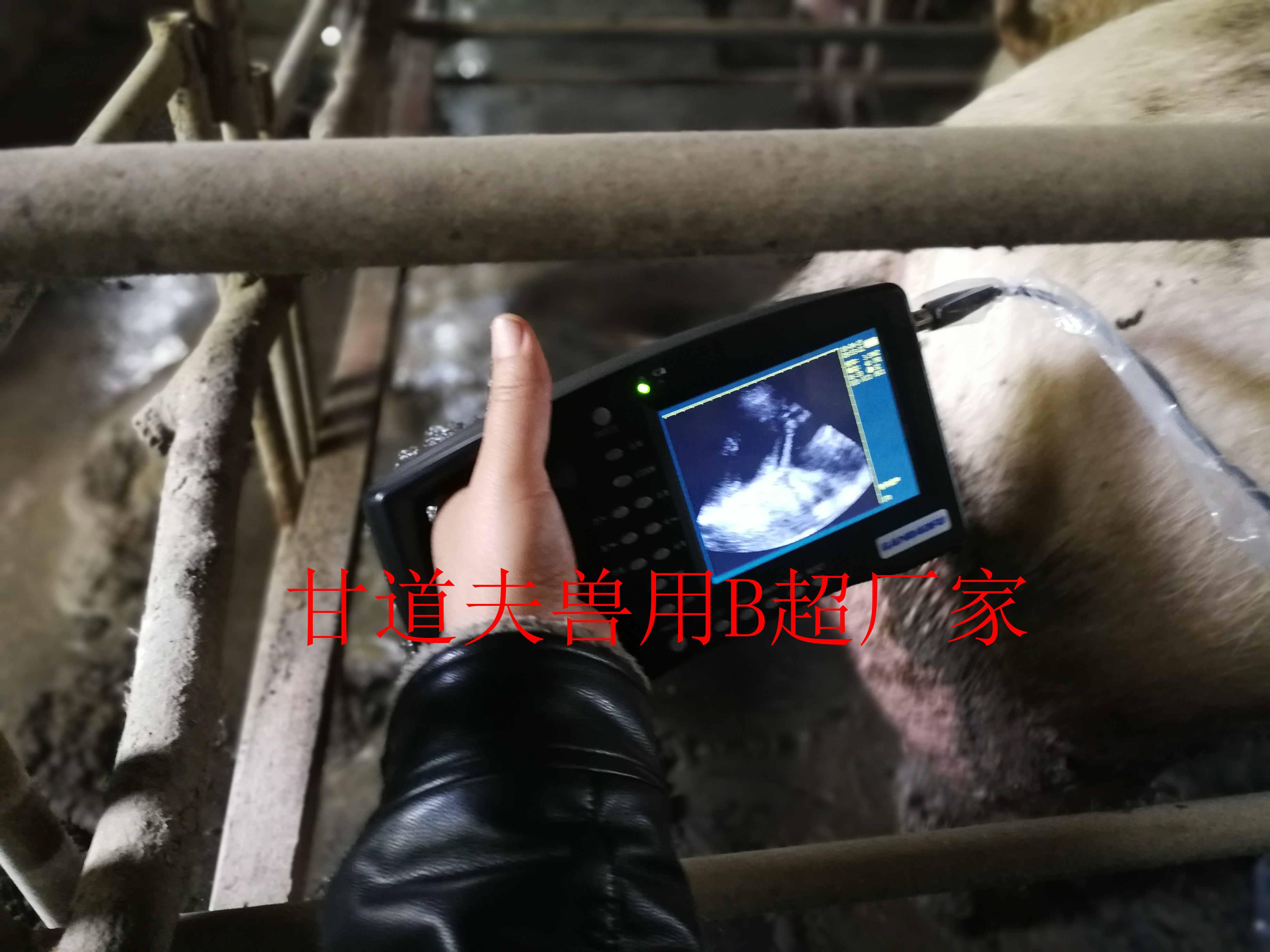 北京瑞生堂农牧合作甘道夫猪用B超厂家