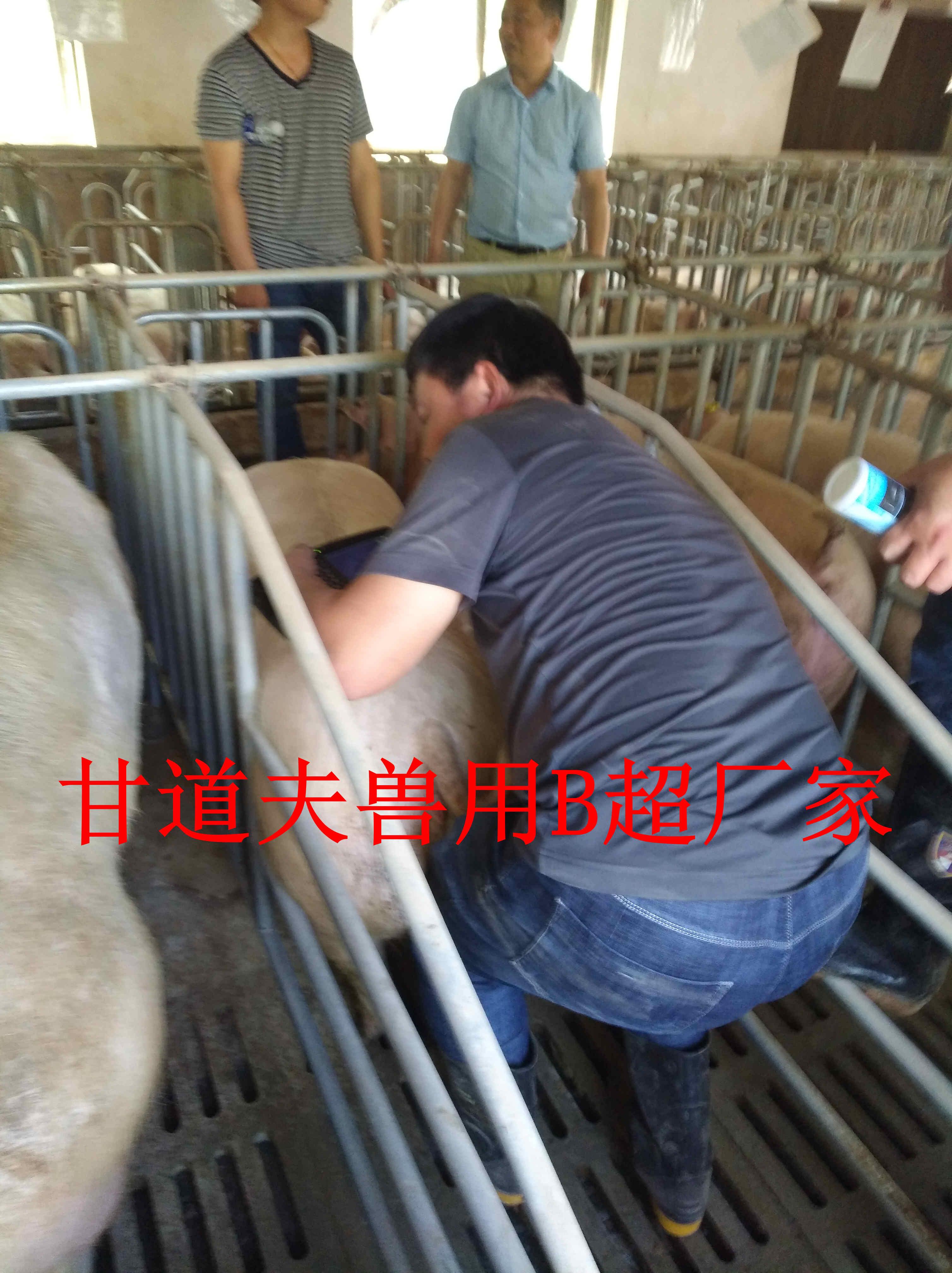 漯河金山饲料科技公司合作甘道夫猪用B超厂家